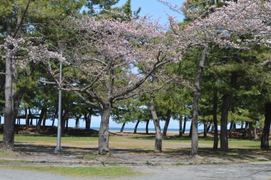 You can see the beach through these trees - whose blossoms have yet to fully unfold.