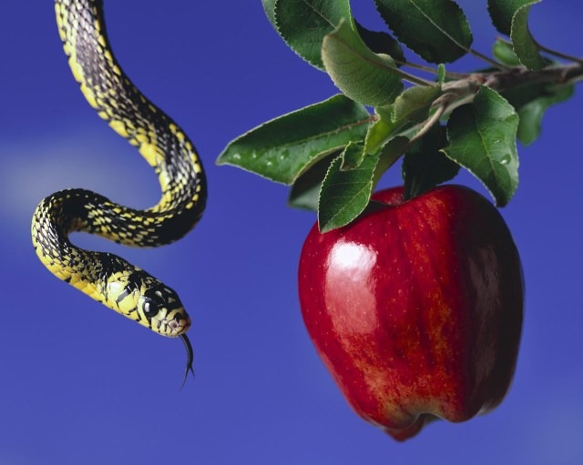 apple-and-snake_1280x1024_2988