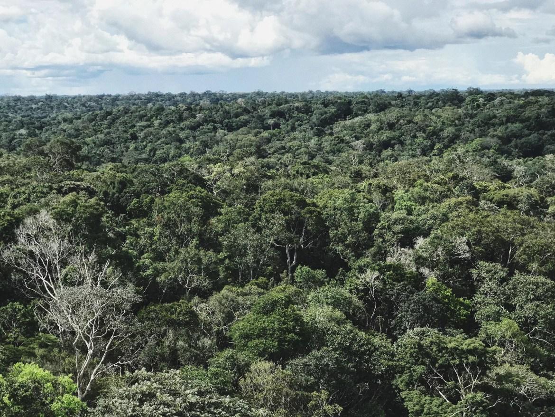 Floresta Amazônica - Conheça