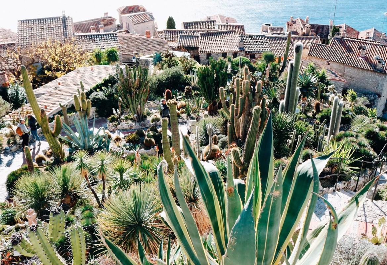 Jardim de cactus