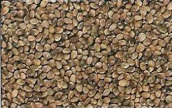 chenevis, graines de chanvre, graines de cannabis