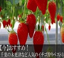 ichigo1