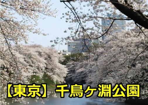 東京千鳥ヶ淵公園の花見の穴場は?場所取りや宴会で気を付ける事!