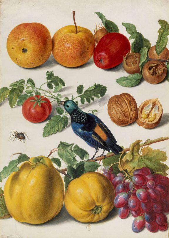Johann Walter der Ältere (1603–1676/7) Früchte, Nüsse, Tomate, ein Vogel (Tangara fastuosa) und eine Spinne. Art On Screen - News - [AOS] Magazine
