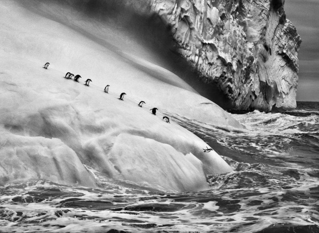 Sebastiao Salgado Genesis, Sebastiao Salgado Ausstellung, Zügelpinguine auf einem Eisberg, Sandwichinseln