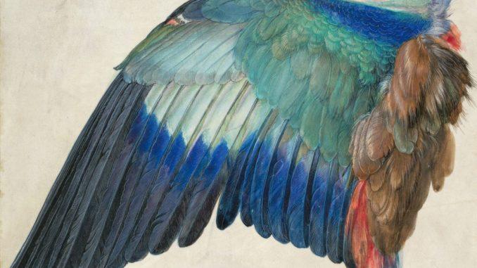 Albrecht Dürer Ausstellung, Albrecht Dürers Zeichnungen, Meisterwerke und Zeichnungen, Ausstellung in der Albertina, Flügel einer Blauracke