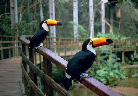 Roteiro-foz-do-iguaçu-parque-das-aves-6 Roteiro Foz do Iguaçu Completo (e ÉPICO) - 3 a 5 dias