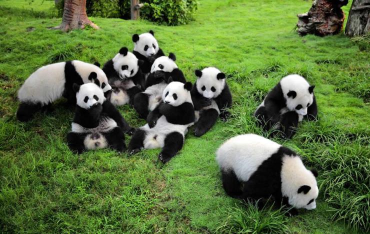 onde-ir-em-abril-18-reserva de pandas