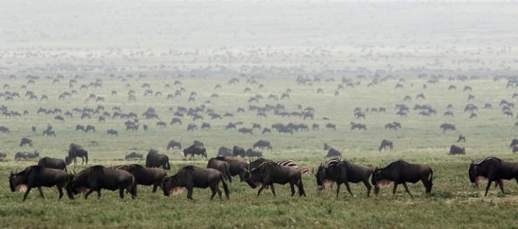 onde-ir-em-junho-dia-25-tanzania Onde ir em Junho? | Série 30 lugares em 30 dias