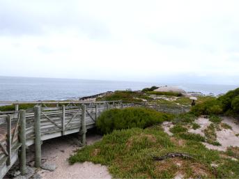 Roteiro Cidade do Cabo 4 a 7 dias boulders beach praia dos pinguins 2