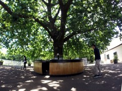 Rota dos vinhos em Cape Town Stellenbosch e Franschhoek boschendal 3