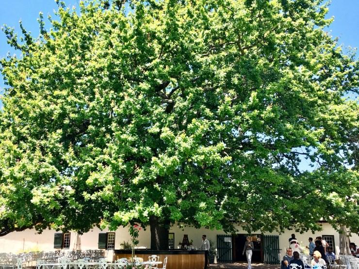 Rota-dos-vinhos-em-Cape-Town-Stellenbosch-e-Franschhoek-boschendal-4 Rota dos vinhos em Cape Town Stellenbosch e Franschhoek