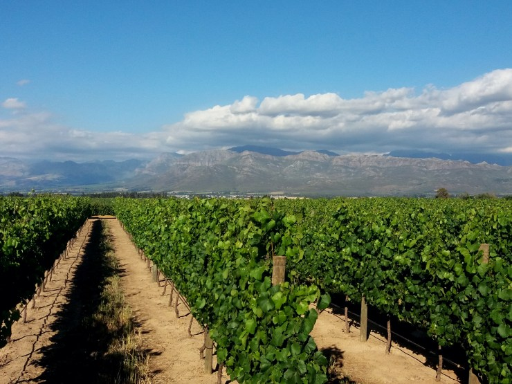 Rota-dos-vinhos-em-Cape-Town-Stellenbosch-e-Franschhoek-plaisir-de-merle Rota dos vinhos em Cape Town Stellenbosch e Franschhoek