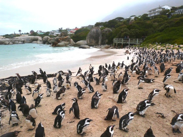 dicas-da-cidade-do-cabo-o-que-fazer Dicas da Cidade do Cabo: Tire dúvidas antes de ir!