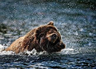 Kodiak Grizzly Travel Adventures