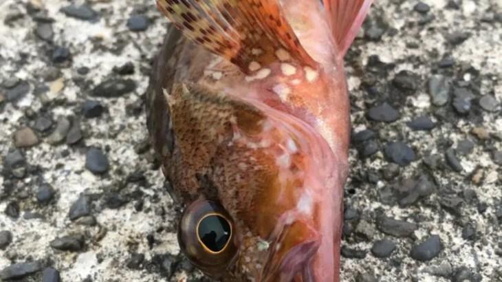 アジングタックル~安い仕掛けで釣りをしよう!