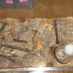 パラワンオオヒラタクワガタの産卵と幼虫