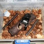 カブトムシ・クワガタの成虫飼育ケースと針葉樹マット