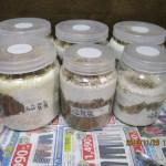 スマトラオオヒラタの幼虫、菌糸ビン飼育とマット飼育の経過⑩