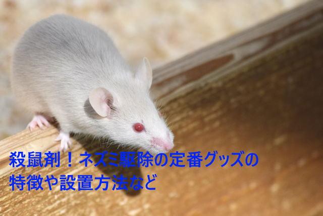 殺鼠剤!ネズミ駆除の定番グッズの特徴や設置方法など
