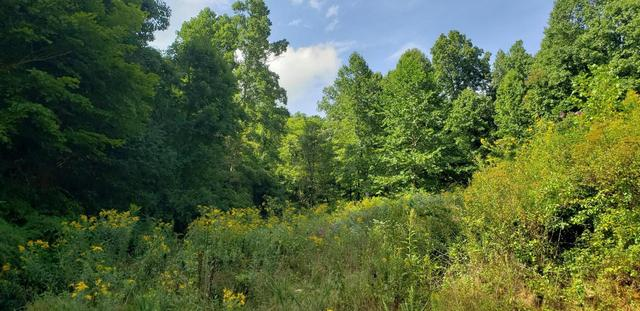 Farm land featured at 101 Branch St, Galax, VA 24333