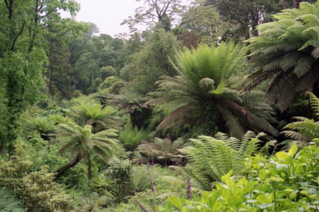 11 Things To Do In Cornwall, Land of Myths and Legends - Lost Gardens of Heligan
