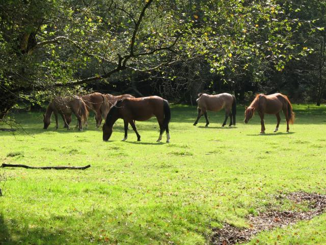 The 13 Best Alternative Day Trips From London - New Forest