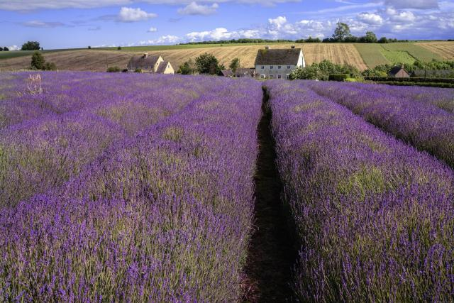 Visiting The 21 Prettiest Towns And Villages In The Cotswolds - Snowshill Lavender