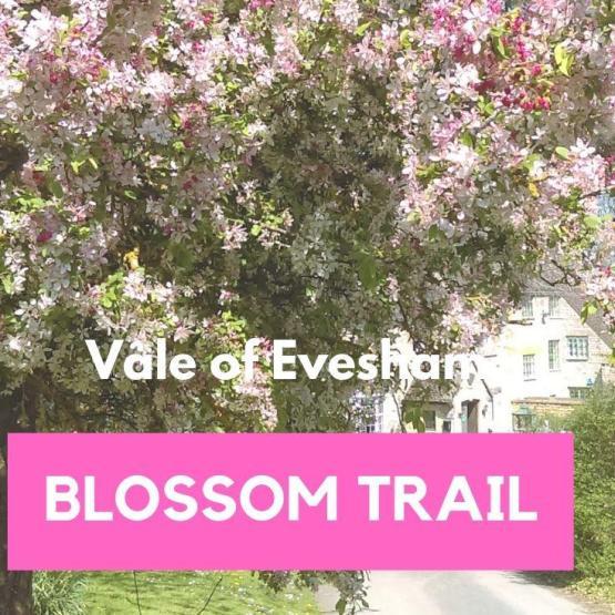 Vale of Evesham Blossom Trail, England