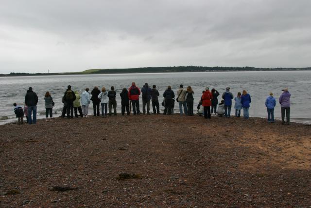 Dolphin spotting at Moray Firth
