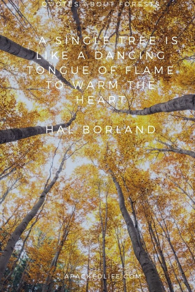 Quotes about Forests - Hal Borland