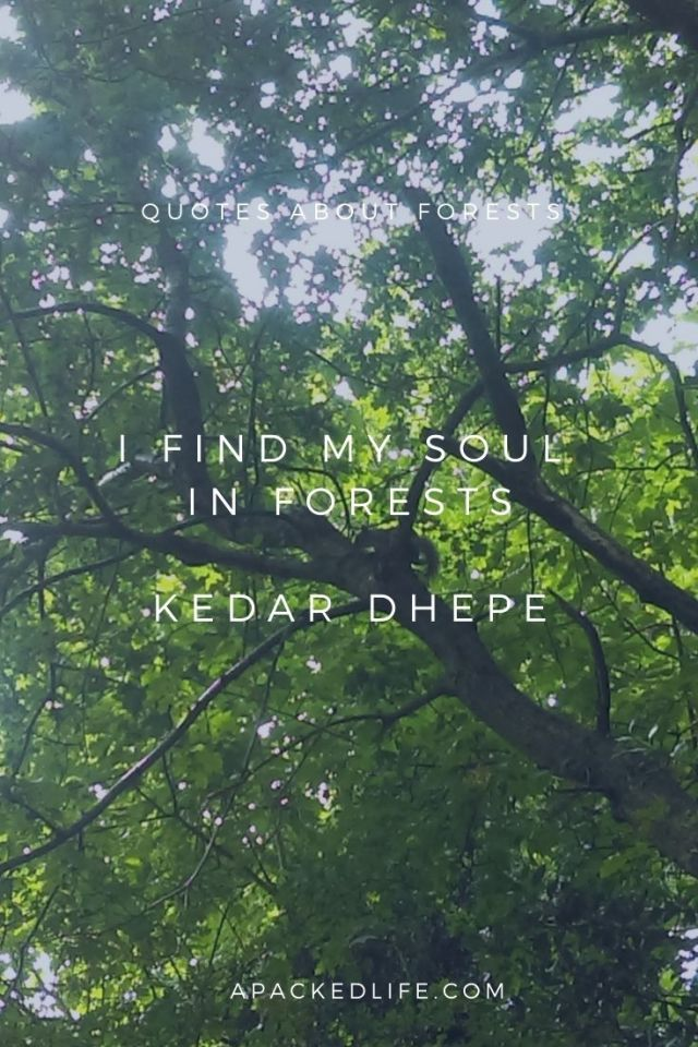 Quotes about forests - Kedar dhepe