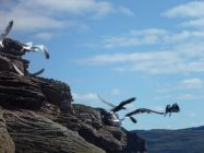... and some sea birds