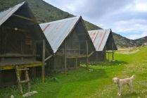 Grain sheds