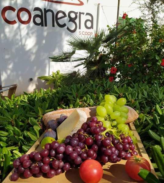 Cooperativa Coanegra