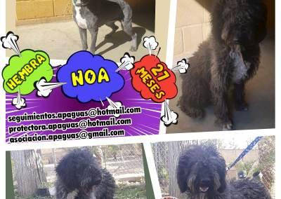 NOA Negrona