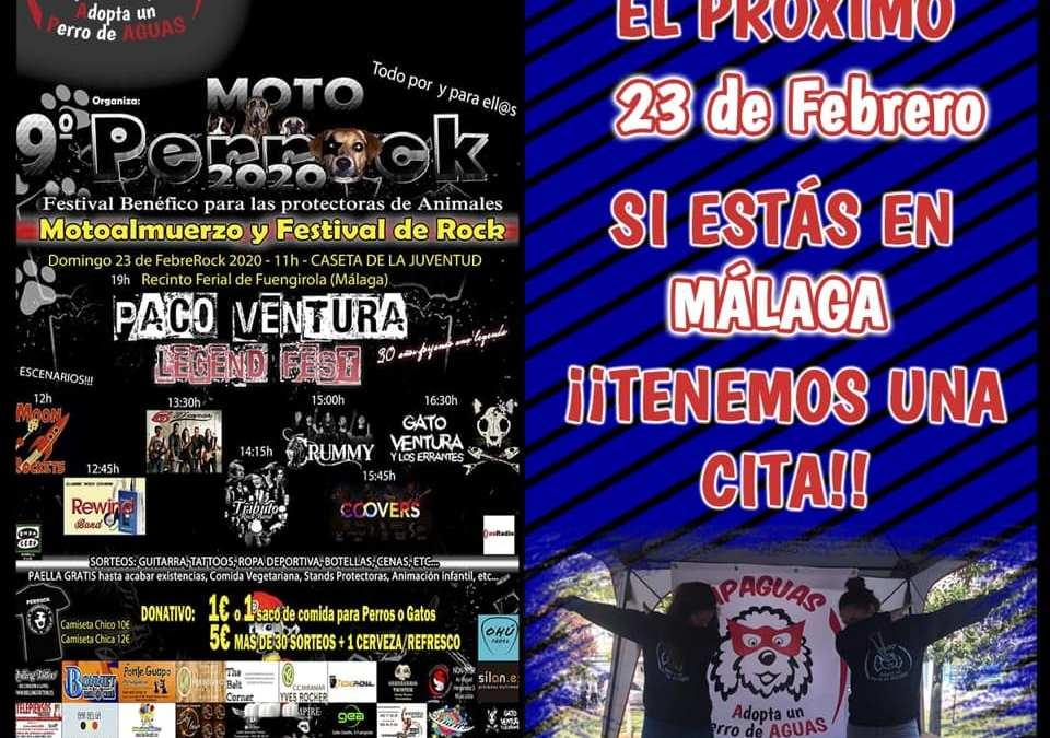 ¡Vamos que nos vamos! El próximo domingo, 23 de febrero en Fuengirola (Málaga) – ¡PERROCK!