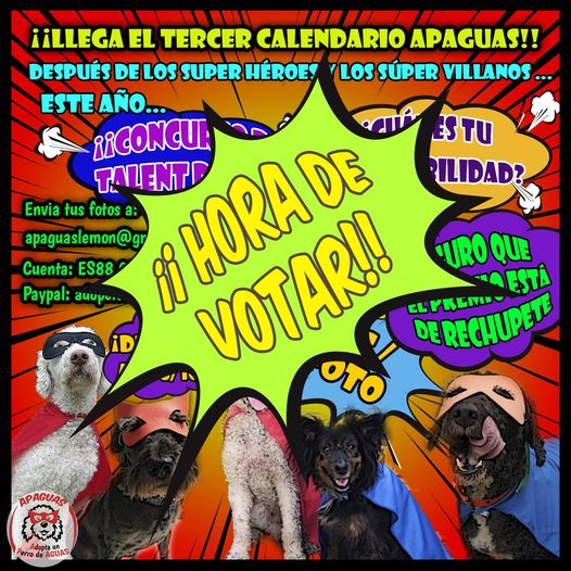 📸 Concurso «Talent Dog» – ¡¡¡ A VOTAR !!!  🐾🐾🐾🐾