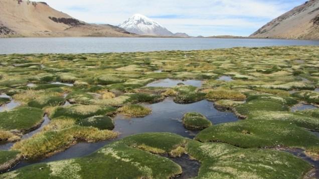 Lagune Chiar Kota, volcan Sajama et llareta