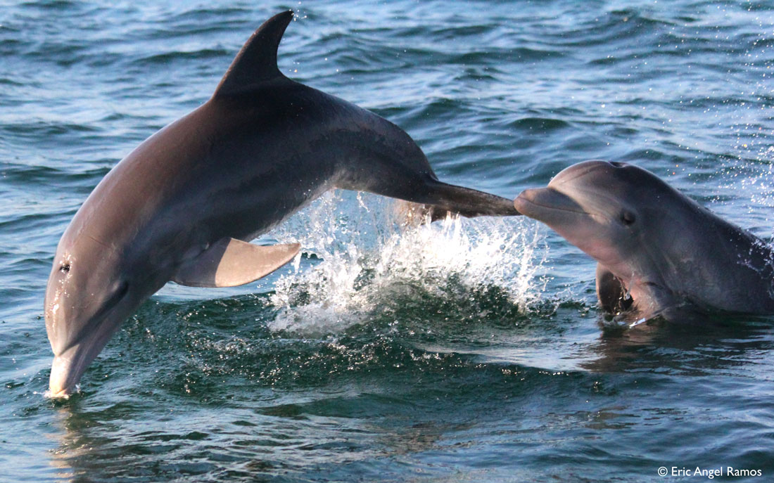2012_04_06--Leaping-dolphin