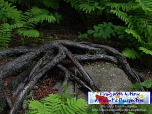 Roots On A Rock