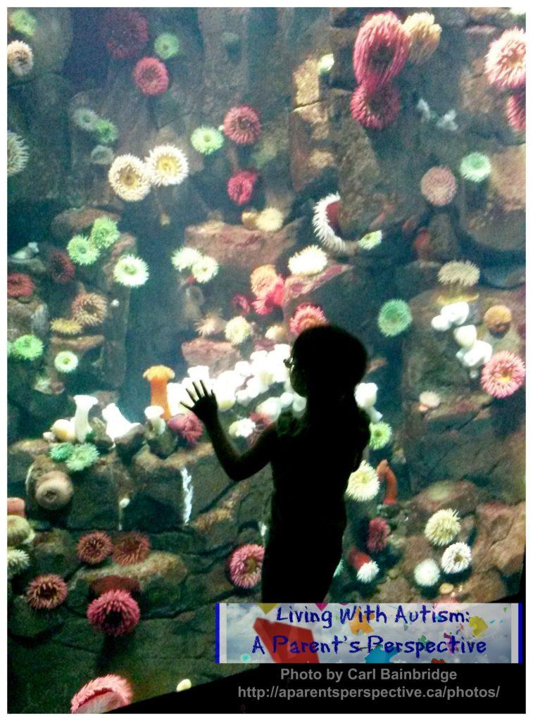 Ripley's Aquarium: Sea Anemone