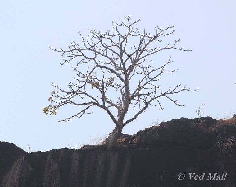 drytree