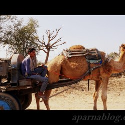 This camel was camera shy :(