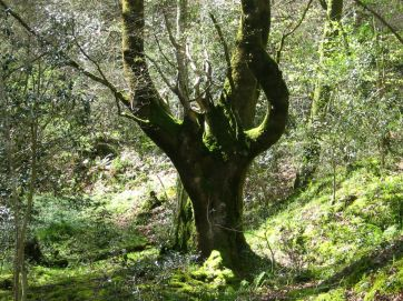 Bosque Cea, Parres