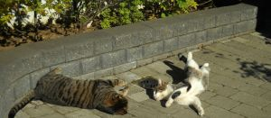 Cats playing in the sun