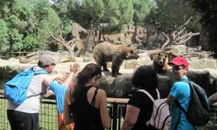 Visita al zoo de Madrid