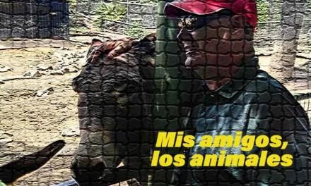 Conociendo los animales