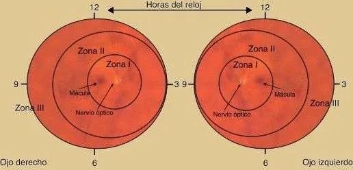 zonas de la retina