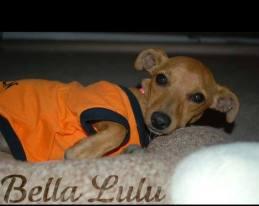 Bella Lulu